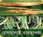 Rice diseases management