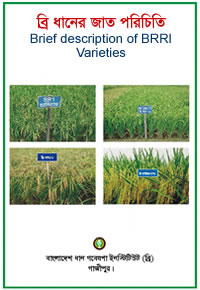 Introduction of BRRI Rice varieties