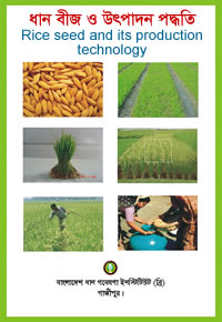 Rice seed and production methods