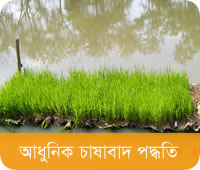 Modern Rice Cultivation Methods