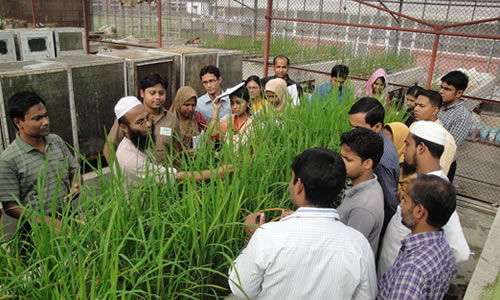 Rice yield gap minimization training