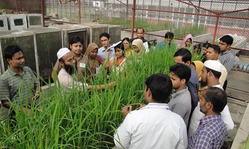 Rice yield gap minimization training