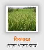 BR35 - Boro Rice Variety