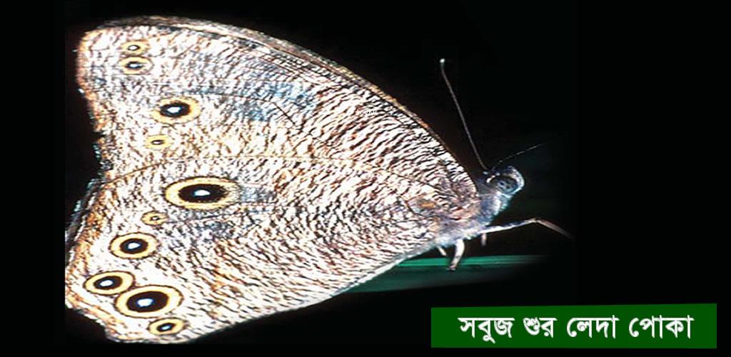 Greenhorned caterpillar