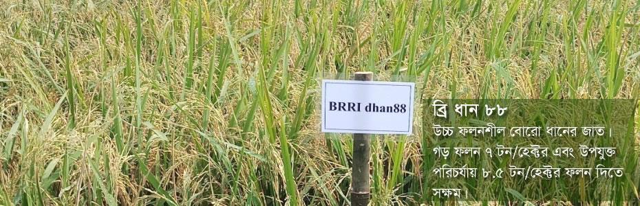 slide banner brridhan88